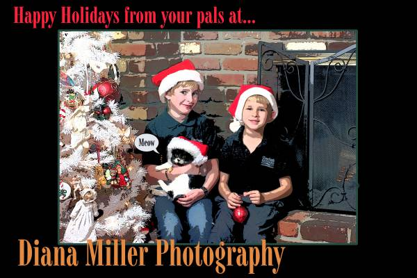 Christmas Cards by Diana Miller Photography